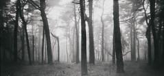 Mist (graemes83) Tags: pinhole film 120 medium format no lens mist fog trees woods forest atmosphere