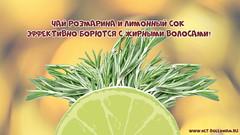 Чай розмарина и лимонный сок эффективно борются с жирными волосами! (netbolezniamru) Tags: волосы жирныеволосы питание красота гигиена шампунь стресс жиры здоровье медицина netbolezniamru