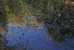 Herbst Rückhaltebecken (Aah-Yeah) Tags: herbst autumn fall rückhaltebecken marquartstein achental chiemgau bayern