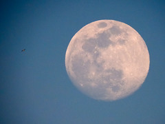 DSCN2700 (athanecon) Tags: moon fullmoon gull flying moonrise superzoom coolpix coolpixp900