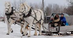 Driving Around (wordman760) Tags: canon digital slr eos rebel sl2 ef70200mmf4lisiiusm cloudy nuageux outdoors extérieur québec canada cheval horse percheron hiver winter mars march 2019 saintpatrick
