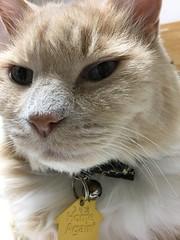 Norio (sjrankin) Tags: 23march2019 edited animal cat norio closeup bed bedroom kitahiroshima hokkaido japan