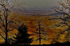 La clairière (RarOiseau) Tags: lardieretvalenca fouillouse forêt montagne zeke arbre hiver couleur