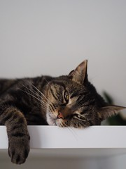 (LucieLune) Tags: amour nature animal home love minou meow cat chat
