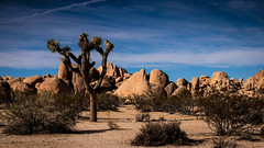 desert2 (MyEyeSoul) Tags: california2016 desertcalifornia landscape travel tourism usa sony colour color blue green brown cactus joshua tree sun sky dry joshuatree nationalpark clouds