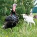 Ручные животные и птицы, отлично уживающиеся вместе