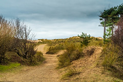 Formby Pinewoods and Coastline (Phil Longfoot Photography) Tags: beach beachcomber beaches formby merseyside nature naturephotography naturephotos landscapes