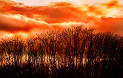 BHRP Sunset 3-0 F LR 1-1-19 J010 (sunspotimages) Tags: sunsetssunrises sunrisesunset sunset sunrise orange nature tree trees sky orangesky sunsetsunrise landscape maryland sunrisesunsets