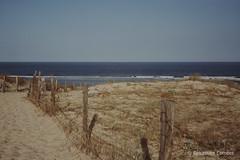 Plage de Moliets et Maa (Sébastien Combet) Tags: molietsetmaa canon canonet fujichrome sensia reversal inversible diapositive summer plage beach landes