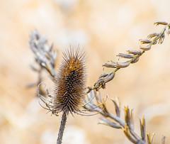 2/19/19 (Omygodtom) Tags: season outdoors oregon d7000 dof golden gold macro bokeh nikon70300mmvrlens flora existinglight bright usgs