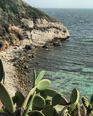 Cala Mosca (Silvia Proto) Tags: bestplace sea seaside sardinia pricklypear fichidindia scogliera rocks