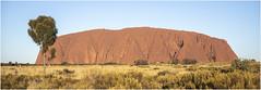 The Uluru (:: Blende 22 ::) Tags: tree baum australia australien nothernterritory outback olgas katatjuta uluru ayersrock basewalk redrocks redcentre rocks bluesky canoneos5dmarkiv ef2470mmf28liiusm