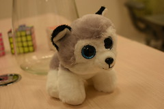 Doggy is watching for you (EvdKV) Tags: dog toy cute