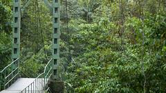 Costa Rica - Bridge at La Selvar Biological Station (Rez Mole) Tags: costa rica bridge la selvar biological station