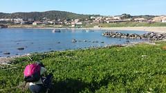 #trecking #portopalma #riomurtas #sardegna #macchiamediterranea #natura #sole #sardegnaalmare #sardegnaconnection #sardegnafoto #sardegnacamping (luisa_m60) Tags: sardegnaconnection sardegnafoto trecking sardegna sole riomurtas sardegnaalmare macchiamediterranea natura portopalma sardegnacamping