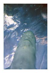 _K001777 (Jordane Prestrot) Tags: ♍ jordaneprestrot requin shark tiburón loroparque zoo desseincaptif captivedesign aquarium acuario