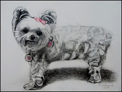 Pencil Drawing Of A Dog - Drawing Done by STEVEN CHATEAUNEUF In 2018 - This Photo Of My Drawing Was Taken On December 16, 2018 (snc145) Tags: dog animal pet drawing art pencildrawing pencil 2018 stevenchateauneuf shading detail flickrunitedaward dogportrait simplysuperb fineart
