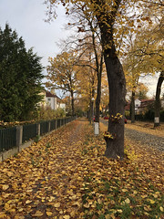 2018/11/12-AKIOS-54 (Arend Kuester) Tags: autumn berlinerphilharmoniker colours herbst road