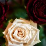 DSC_6369A thumbnail