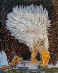 "American Eagle, 16""X20"", Available, Reference photo by Jerry AmEnde (KarenESP1963) Tags: baldeagle coloredpencil wildlife avain birdofprey eagle americaneagle"