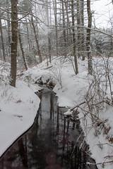 quabbinreservoir2019-89 (gtxjimmy) Tags: nikond7500 nikon d7500 winter snow quabbinreservoir swiftriver ware belchertown massachusetts watersupply newengland quabbin