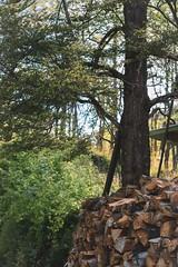 Coyhaique y alrededores (Christopher León Vilches) Tags: coyhaique patagonia carretera austral canon carl zeiss chile leña bosque