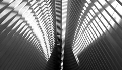 1500_DSCF2549 bw (LoboArtHouse) Tags: oculus newyork travel worldtradecenter architecture structure curves lightandshadow lookup lights blackandwhite peace