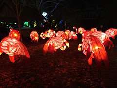 OH Columbus - Ohio Chinese Lantern Festival 49 (scottamus) Tags: columbus ohio franklincounty holiday winter christmas light lanter display night ohiochineselanternfestival dragonlightscolumbus flamingoes