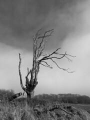 Dead Tree (Mike Legend) Tags: kent boughton lees tree dead skeleton monochrome