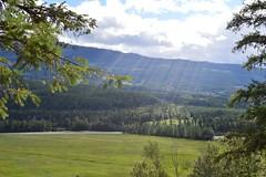 DSC_3813_jpeg (Ceceliamch) Tags: jaspernationalpark yohonationalpark emeraldlake athabascaglacier icefieldsparkway athabascafalls miettehotsprings bowlake mountains banff jasper yoho bc alberta