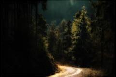 Die Schönheit des Waldes (linke64) Tags: thüringen deutschland germany gegenlicht grün natur nadelbäume landschaft licht wald weg baum bäume waldweg
