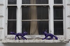 Purple Cats (SReed99342) Tags: london uk england purple cats windowsill