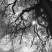 Pic-nic au pied du grand arbre