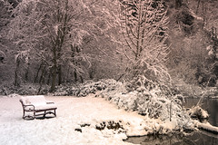 Snow Covered Bench (Don Thoreby) Tags: winter snow maplevalley washingtonstate usa lakewilderness arboretummaplevalley arboretum lakewildernessarboretum forest conifers groves firtrees douglasfir cedar cedartrees westernredcedar hemlock hemlocktrees oldgrowthforest forestroads foresttrails pnw pacificnorthwest bench parkbench