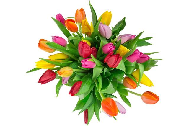 Обои букет, тюльпаны, белый фон картинки на рабочий стол, раздел цветы - скачать