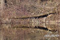 Nice reflection in the nature (chk.photo) Tags: landschaft nature naturewatcher outdoor nudibranch landscape water natur naturemasterclass light ngc reflex tree baum austria teich lake salzburg fluss see