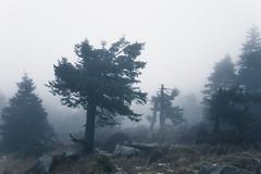 Wald Vegetation Brocken (Gruenewiese86) Tags: 2018 harz hütte november sony a6500 wald forest forestscape fog nebel angst tod tot geheimnisvoll mystisch mystical germany holz baum himmel landstrase