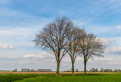 Three tall bare trees in a row (RuudMorijn-NL) Tags: drimmelen noordbrabant agriculture background bare beautiful blue branch branches colorful country countryside day dike dutch embankment field foreground grass green horizon landscape leafless light meadow nature netherlands outdoors overview park perspective plowed row rural scenic season silhouette sky slope springtime sunny tall three trees trio trunk view weather white yellow ruilverkavelingsweg bomen bomenrij rij hoge kaal lente voorjaar landelijk landschap natuur blauw lucht hemel bewolkt wolken wit groen gras geploegd akker agrarisch dijk schilderachtig