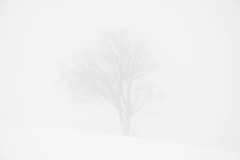 a short story about the lime (ignacy50.pl) Tags: winter winterlandscape snow tree lime highkey blackandwhite mountains minimal