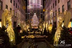 Rockefeller Center Christmas Tree, New York City, USANew York City, USA (AnthonyGurr) Tags: newyork newyorkcity nyc thebigapple america usa unitedstates christmastree rockefeller center anthonygurr manhattan city