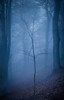 Delicate (kieran_metcalfe) Tags: fantasy landscape winter damp mood fairytale fragile texture countryside alderleyedge wooded dark silent fog branches uk autumn moss natural england eerie nature mist spooky enchanted moody delicate hillside cheshire sapling woodland trees dead wild unitedkingdom tree bare leaves scenic green outdoors cold atmosphere lone lichen blue