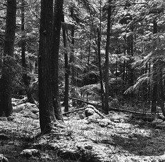 (babireley) Tags: minoltaautocord kodakpanatomicx expiredfilm 1982 thedarkroomlab winter snow pottercounty pa pawilds pottercountypa pennsylvania usa