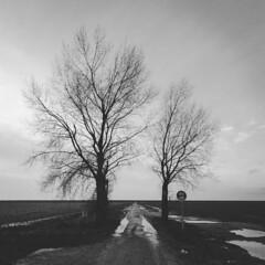 Fietspad (alowlandr) Tags: holland almere flevopolder fietspad zwartwit boom landschap winter polder regen flevoland netherlands nl bicyclepath dutch landscape baretree puddle rain