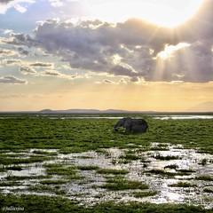 Éléphant Kenya (juliusjoa) Tags: réflection sky sun nature photography photographie photo picture africa kenya travel éléphant