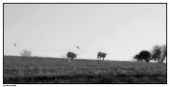 Matin dans les Champs (faurejm29) Tags: faurejm29 canon campagne landscape sigma nature nb paysage