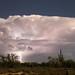 Arizona Monnsoon Thunderstorm