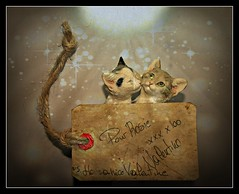 Valentine (patrick.verstappen) Tags: texture twitter textured belgium gingelom google d5100 sigma nikon photo painting card love art valentine flickr facebook picassa pinterest paper ipernity ipiccy valentin amour peinture doux belgique février amor pintura arte dulce tú bélgica febrero ты февраль liebe malerei kunst süs du februar sweet you february valentín праздник xxx enamorado enamorada valentino valentijn cats statuette lovely littlesculpture ♥ like tag life lol drawing textura writing photography rosie girlfriend