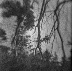 Malpeque Woods (LowerDarnley) Tags: browniehawkeyeflash kodak 620film flippedlens expiredfilm dandipan malpeque pei princeedwardisland woods branches vines atlanticcanada maritimes