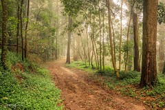 Walk through the mist (jorgeverdasca) Tags: path trees fog nature magiclight mist woodland forest sintra portugal