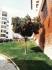 #29 (c.anesthesia) Tags: alverca pt portugal laranjas